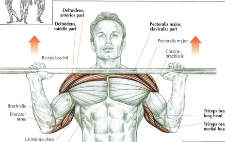 Bench press and inclines. Which one and why? | Far Beyond ... Overhead Press Muscles Worked
